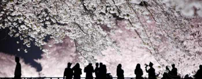 Cherry Blossoms ombres slider JPG